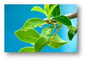 1 A Planta Molhada