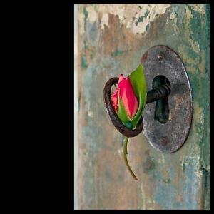 000000 flor na porta